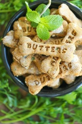 Weekly Recipe for Dogs: Pumpkin Apple Mint Treats petworldglobal.com