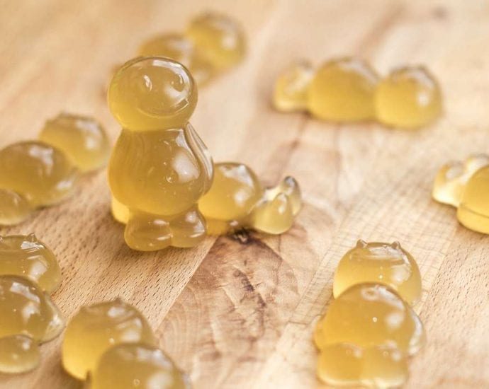 Weekly Recipe for Dogs: Bone Broth Jellies petworldglobal.com