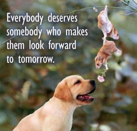 Everybody deserves somebody who makes them look forward petworldglobal.com
