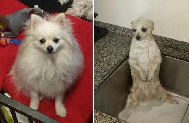 15 Hilarious Dogs Before and After Bath petworldglobal.com