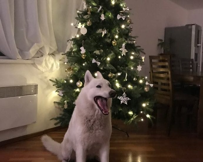 TOP 5 Best Ideas To Celebrate Christmas With Your Pet petworldglobal.com
