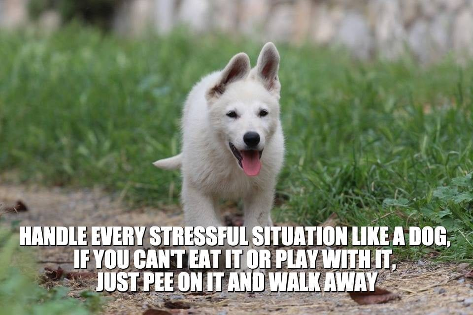 Daily Quotes: Handle every stressful situation like a dog, If you can't eat it or play with it, just pee on it and walk away petworldglobal.com
