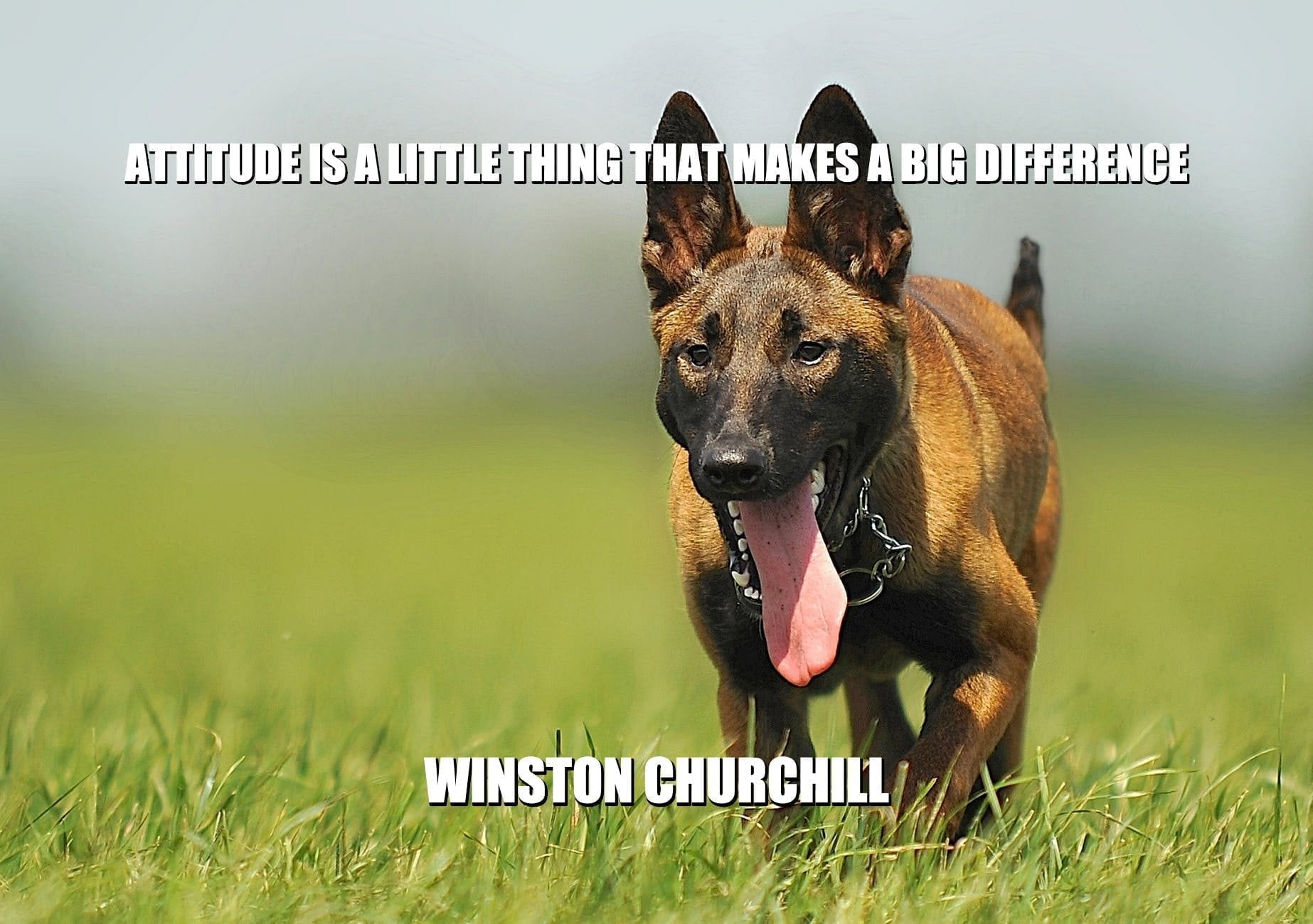 Daily Quotes: Attitude is a Little Thing That Makes a Big Difference petworldglobal.com