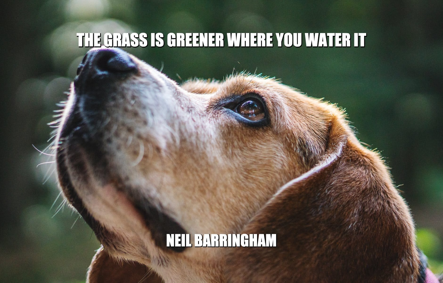 Daily Quotes: The Grass is Greener Where You Water It petworldglobal.com