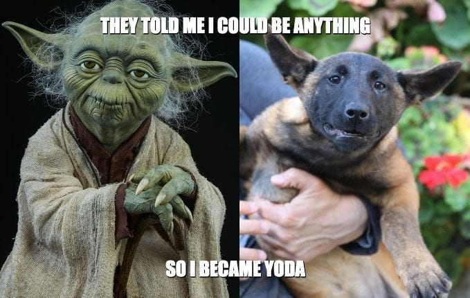 They Told Me I Could Be Anything So I Became Yoda petworldglobal.com