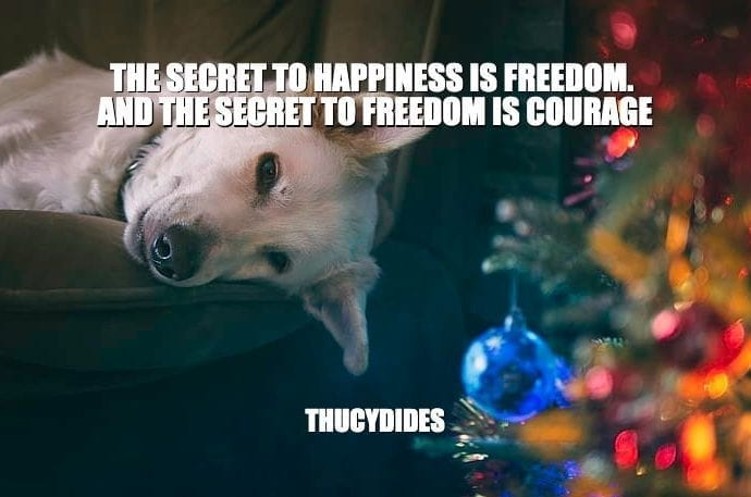 Daily Quotes: The Secret To Happiness Is Freedom. And The Secret To Freedom Is Courage petworldglobal.com