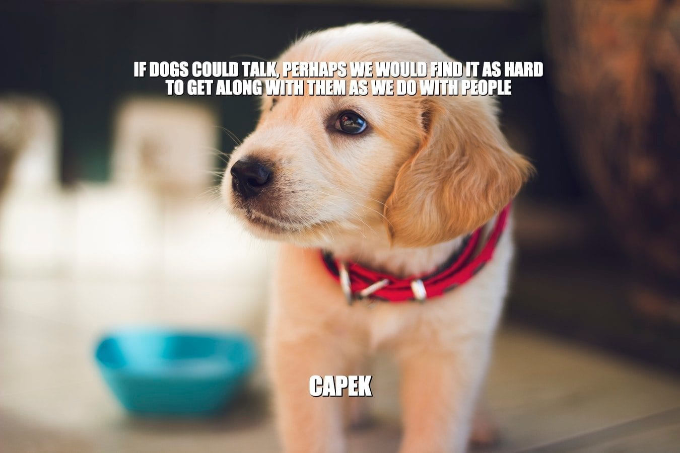 Daily Quotes: If Dogs Could Talk, Perhaps We Would Find It As Hard To Get Along With Them As We Do With People petworldglobal.com