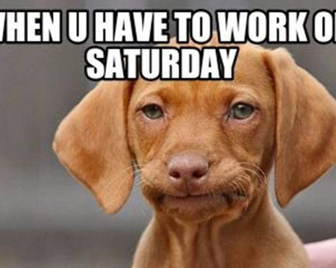 When You Have to Work on Saturday petworldglobal.com