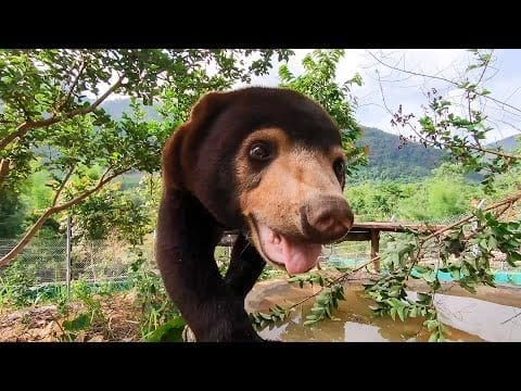 14 Reasons Sun Bears Are Your New Favourite Animal | Bears About The House | BBC Earth petworldglobal.com