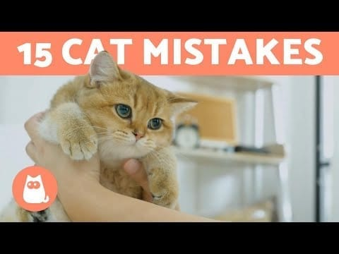 15 THINGS YOU MUST NEVER DO TO YOUR CAT 🐱 petworldglobal.com