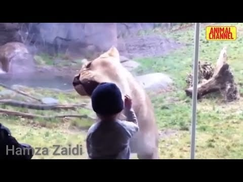 Amazing Animals Video | Animals Fights | Attacks People | 驚人的動物視頻|動物打架|攻擊人 | Must Watch 2020 petworldglobal.com
