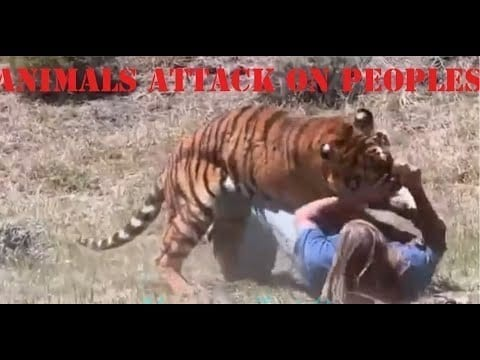 Animals ATTACK On People ??? Watch Latest Video 2020 | Tiger Forced On Men | Hamza Zaidi petworldglobal.com