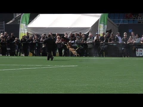 Best of NK KNPV 2019 Eindhoven petworldglobal.com