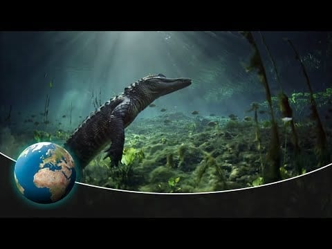 Breathtaking insights into the amazing ecosystem of the Everglade National Park petworldglobal.com