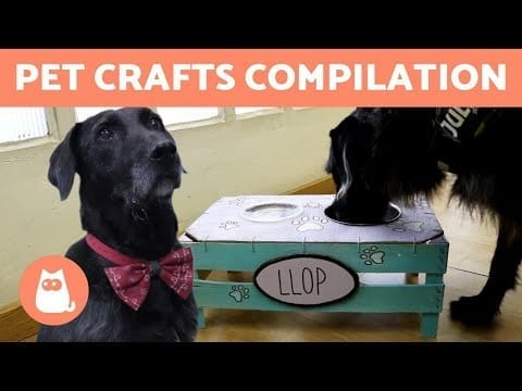 DIY CAT and DOG Toys and Accessories 🐶🐱 HOMEMADE PET CRAFTS petworldglobal.com