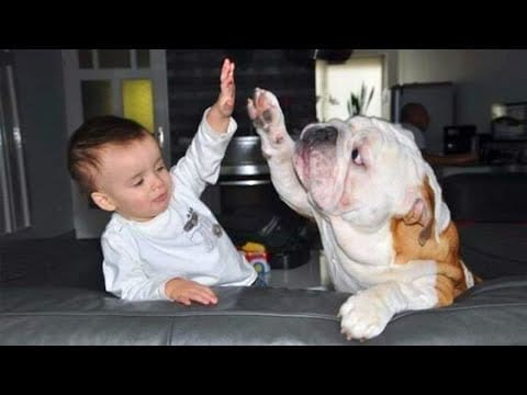 Dog is a member of the family - Cute baby , cute dog are the best friend petworldglobal.com