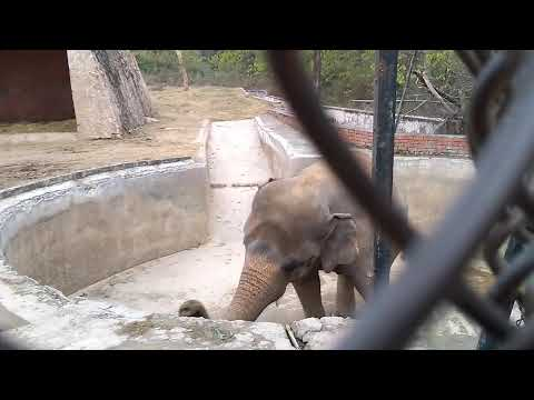 Elephant (BABY) | Animals Lovers Must Watch 2020 petworldglobal.com