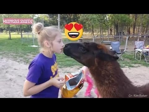 Funny Animals With Human Fails | Try Not To Laugh Animals | 2020 | Must Watch petworldglobal.com