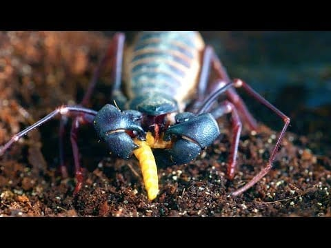 How Do Insect Predators Make Insect Soup?   Survival of the Weirdest   Love Nature petworldglobal.com