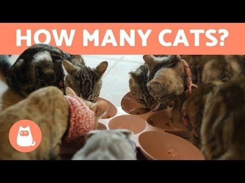 How Many CATS Can You Keep at HOME? 🐱🏠 petworldglobal.com