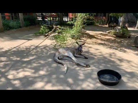 "Live from Sac Zoo in the ""Roo Yard"" petworldglobal.com"