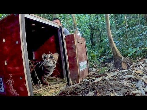 Releasing Rescued Animals Back Into The Wild | BBC Earth petworldglobal.com