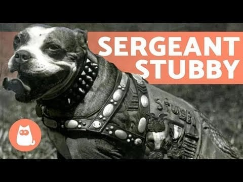 STUBBY - The DOG that Became a SERGEANT 🐶 petworldglobal.com