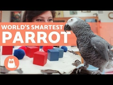 The SMARTEST PARROT in the WORLD 🦜💬 (Alex the African Gray) petworldglobal.com