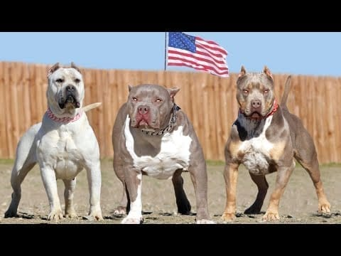 These Are American's Most Favorite Dog Breeds petworldglobal.com