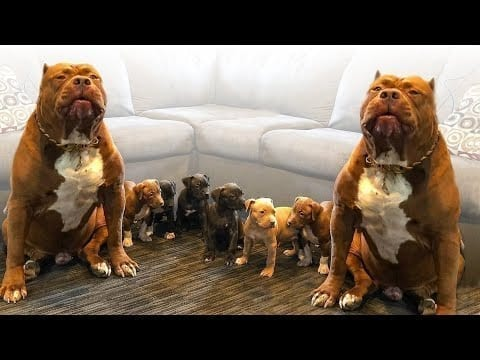 These Are Top 10 Cuddliest Dog Breeds petworldglobal.com