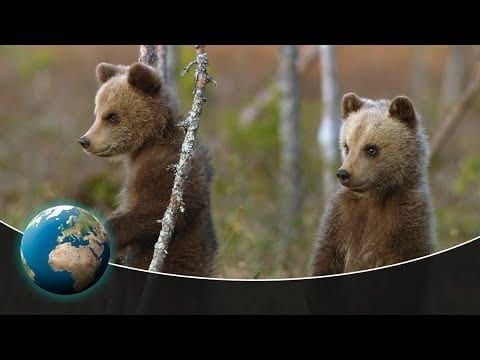 Three young bears find their way in the world petworldglobal.com