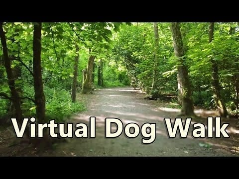 Walk Your Dog TV ~ Virtual Dog Walking ~ In to The Woods petworldglobal.com