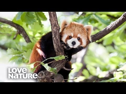 Why Do These Animals Live In Trees? | Survival of the Weirdest | Love Nature petworldglobal.com