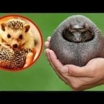14 Animals You Won't Recognize Without Hair petworldglobal.com
