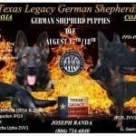 CHAMPION GERMAN SHEPHERD WORKING LINE PUPPIES IN LUBBOCK TEXAS petworldglobal.com