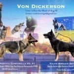 German Shepherd Puppies from Von Dickerson Extreme Orex Aykmar Puppies