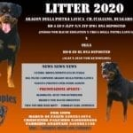 Rottweiler Puppies for Sale in Italy