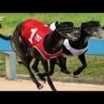 Australian dog racing - Track race petworldglobal.com