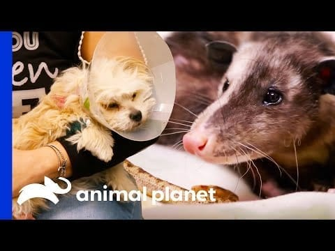 Check Out These Amazing Medical Moments! | The Vet Life petworldglobal.com