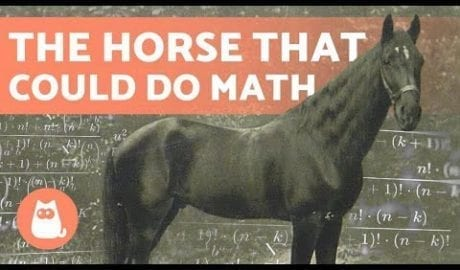 (CLEVER HANS) 🐴➕ The HORSE That Learned MATHEMATICS petworldglobal.com