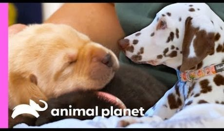 These Adorable Puppy Moments Will Leave You With Permanent Heart Eyes! 😍 | Animal Planet petworldglobal.com