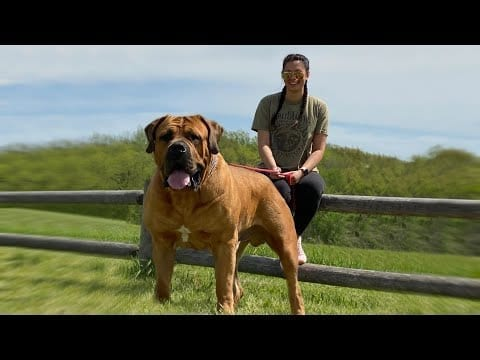 These Are 10 Best Barnyard Dog Breeds petworldglobal.com