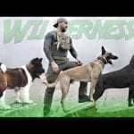 These Are 10 Best Dogs for Wilderness Survival petworldglobal.com