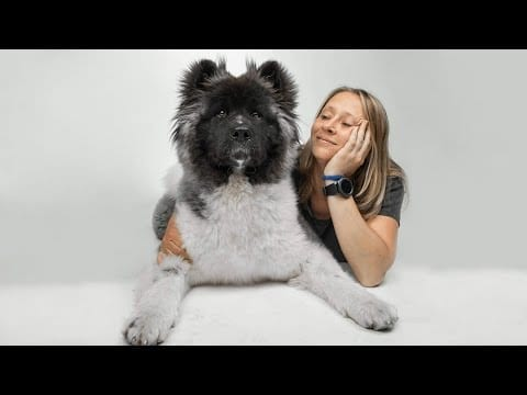 These Are 10 Teddy Bear Dog Breeds petworldglobal.com