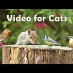 Video for Cats to Watch - 8 Hour Megamix ⭐ petworldglobal.com