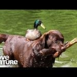 Why Dogs Are Awesome! | Oddest Animal Friendship | Love Nature petworldglobal.com